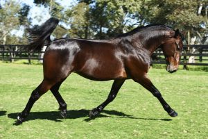 Allwood Stud and Port Pirie Harness Racing Club join forces