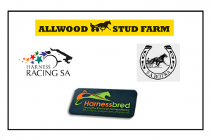 Allwood Stud 2018 SA Yearing Sale