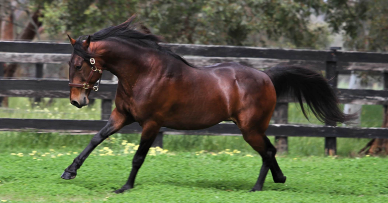 Red letter month for Allwood Stud