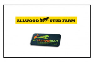 Harness Racing buzzing over Allwood Yearling Sale