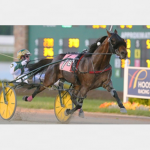 Royally bred son of Rocknroll Hanover for WA stud