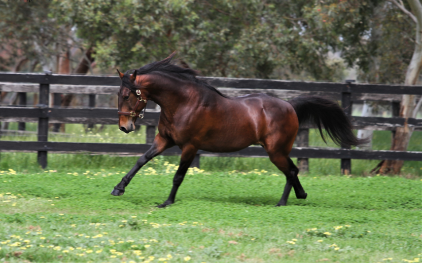 Allwood Owned Mare Pocket's Group Classic